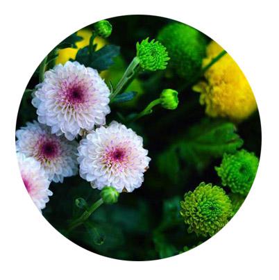 頂極植萃:母菊花、異株蕁麻、香蜂花葉油、款冬花萃取、問荊萃取、歐洲七葉樹籽、迷迭香葉、藥鼠尾草葉。